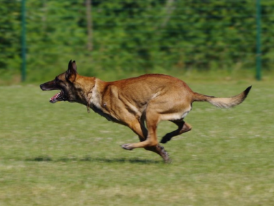 Dog shoes – a necessity or an owner's fad?